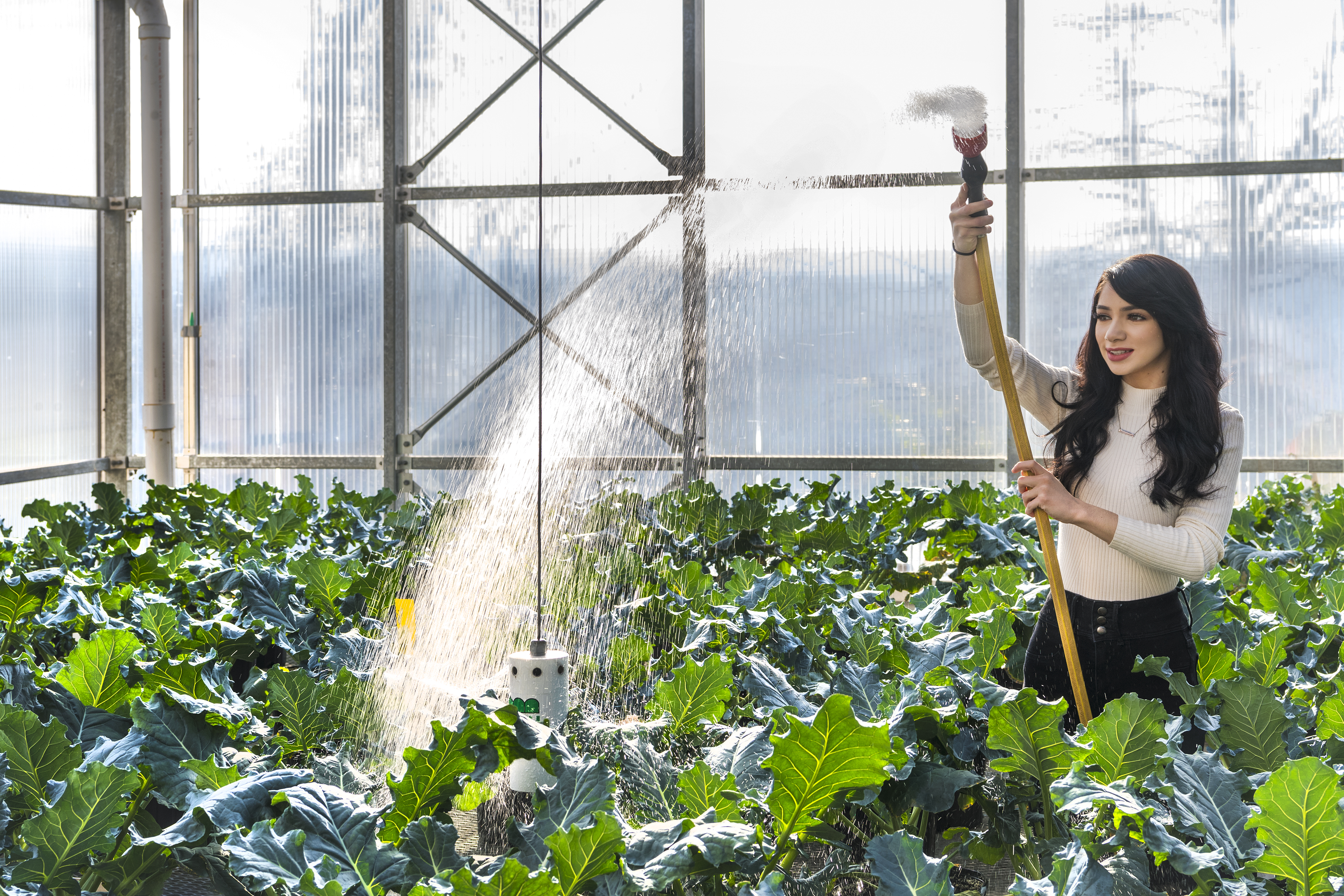 Student waters plants used for research in WVU greenhouse